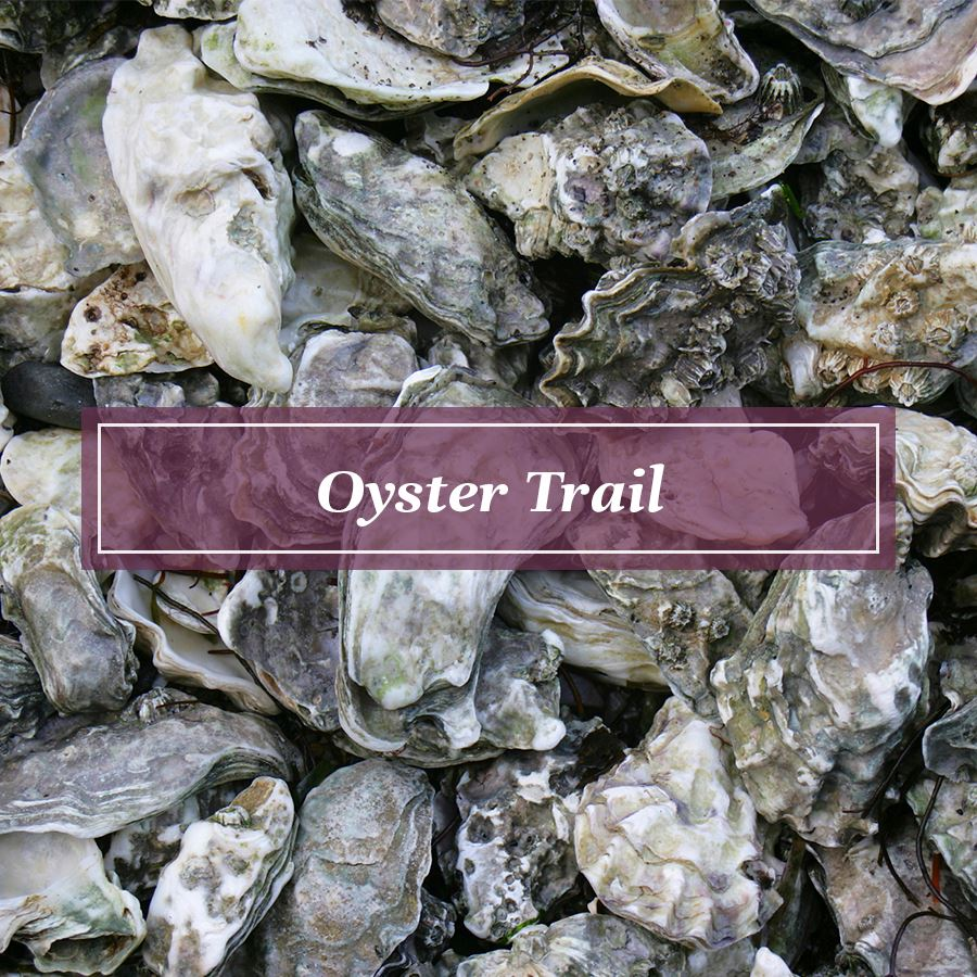 Oyster Trail