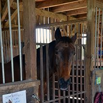 Freedom Hill Horse Rescue